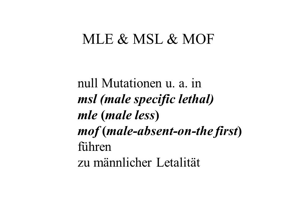 MLE & MSL & MOF null Mutationen u. a. in msl (male specific lethal) mle (male less) mof (male-absent-on-the first) führen zu männlicher Letalität