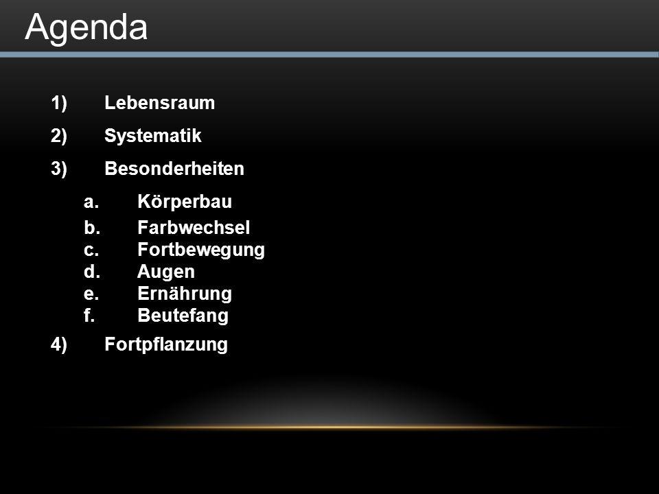 Agenda 1)Lebensraum 2)Systematik 3)Besonderheiten a.Körperbau b.Farbwechsel c.Fortbewegung d.Augen e.Ernährung f.Beutefang 4)Fortpflanzung