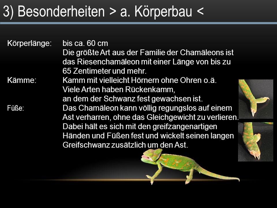2) Systematik ReichTiere StammWirbeltiere KlasseReptilia (Reptilien) OrdnungSquamata (Schuppenkriechtiere) FamilieChamäleons