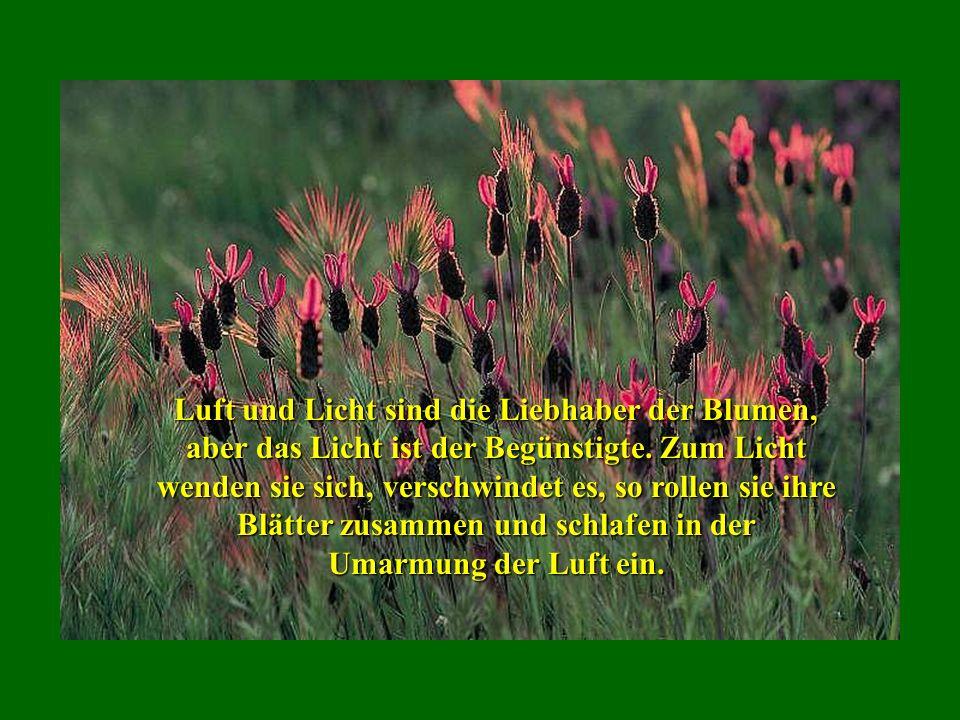 Die Hochzeit der Seele mit der Natur macht den Verstand fruchtbar und erzeugt die Phantasie