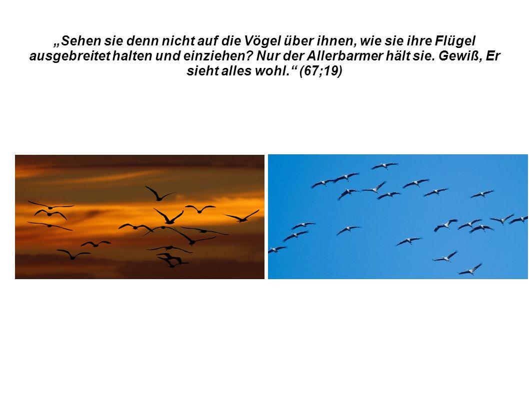 """""""Sehen sie denn nicht auf die Vögel über ihnen, wie sie ihre Flügel ausgebreitet halten und einziehen."""