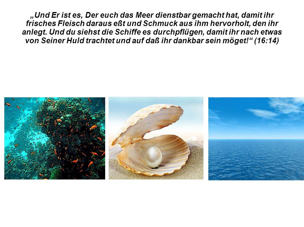 """""""Und Er ist es, Der euch das Meer dienstbar gemacht hat, damit ihr frisches Fleisch daraus eßt und Schmuck aus ihm hervorholt, den ihr anlegt."""