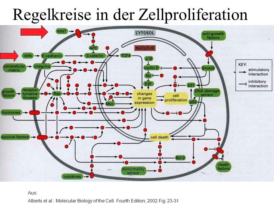 Aus: Alberts et al.: Molecular Biology of the Cell. Fourth Edition, 2002.Fig. 23-31 Regelkreise in der Zellproliferation