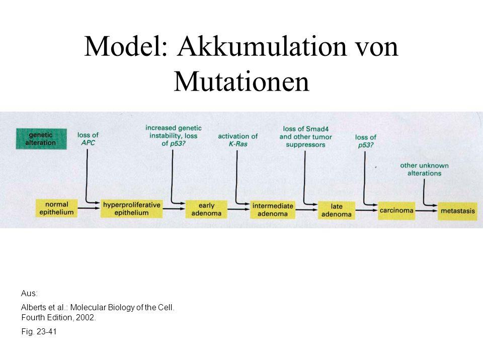 Aus: Alberts et al.: Molecular Biology of the Cell. Fourth Edition, 2002. Fig. 23-41 Model: Akkumulation von Mutationen