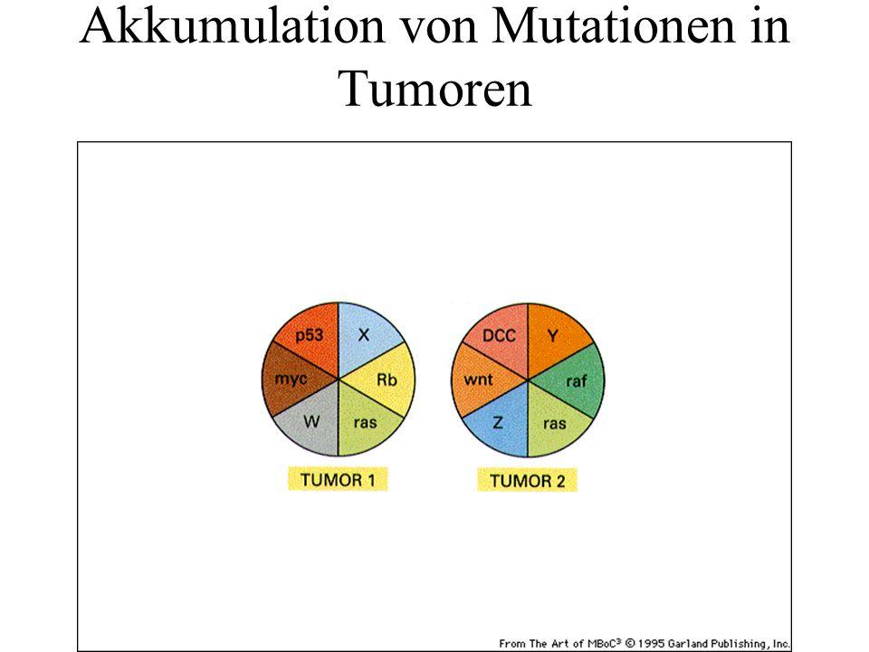 Akkumulation von Mutationen in Tumoren