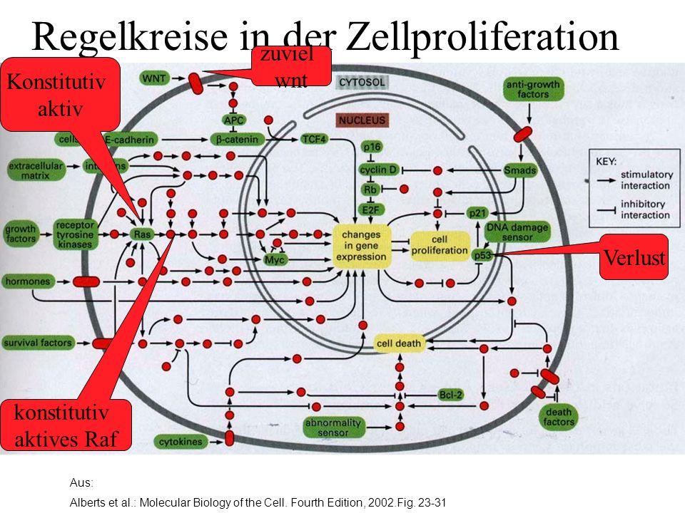 Aus: Alberts et al.: Molecular Biology of the Cell. Fourth Edition, 2002.Fig. 23-31 Regelkreise in der Zellproliferation Verlust Konstitutiv aktiv kon