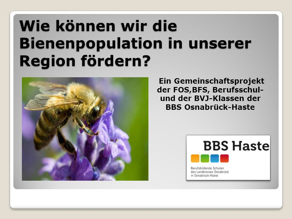 Wie können wir die Bienenpopulation in unserer Region fördern.
