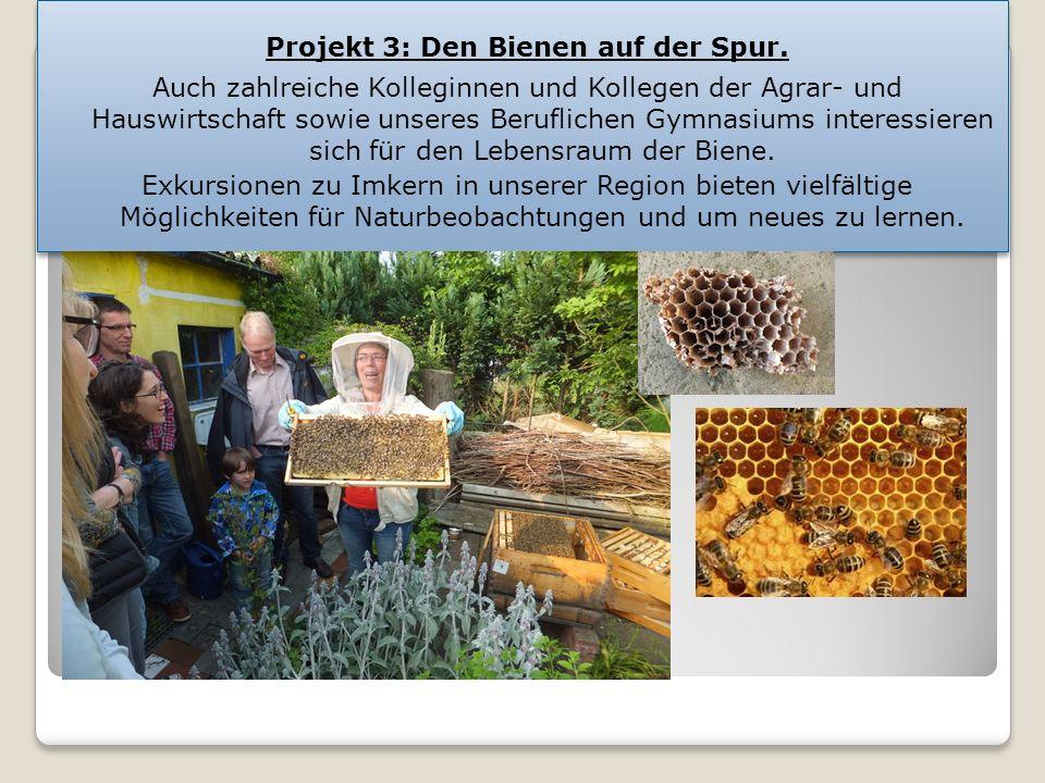 Projekt 3: Den Bienen auf der Spur.