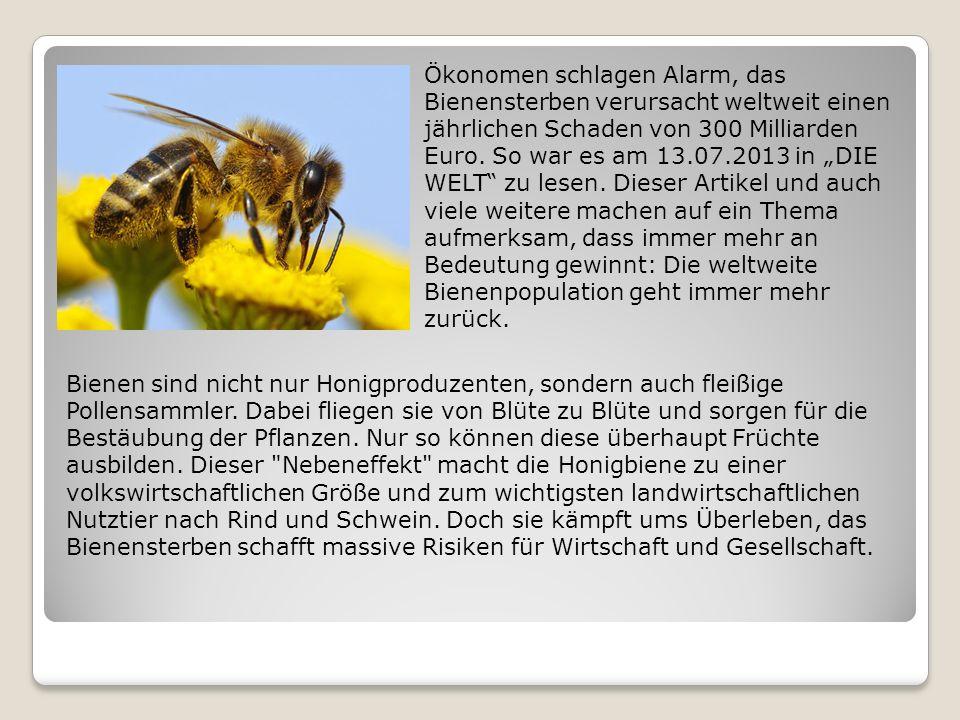 Ökonomen schlagen Alarm, das Bienensterben verursacht weltweit einen jährlichen Schaden von 300 Milliarden Euro.
