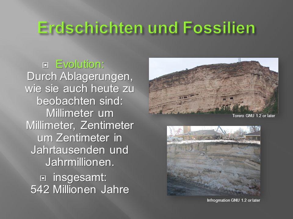  Evolution: Durch Ablagerungen, wie sie auch heute zu beobachten sind: Millimeter um Millimeter, Zentimeter um Zentimeter in Jahrtausenden und Jahrmillionen.