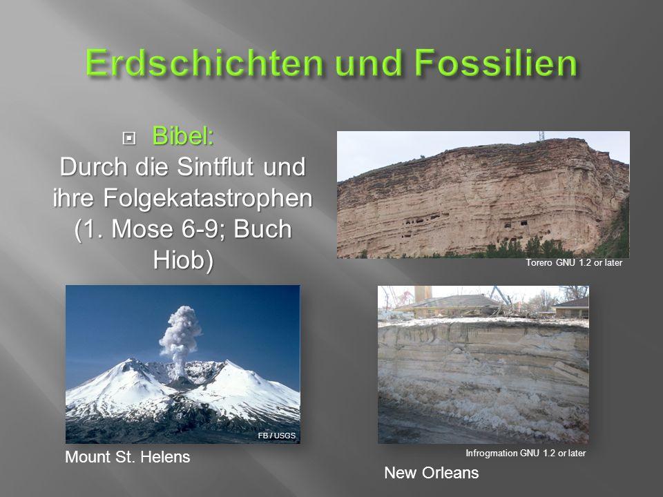  Bibel: Durch die Sintflut und ihre Folgekatastrophen (1.