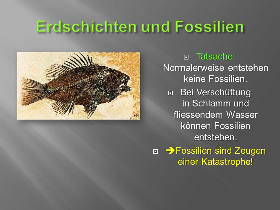  Tatsache: Normalerweise entstehen keine Fossilien.
