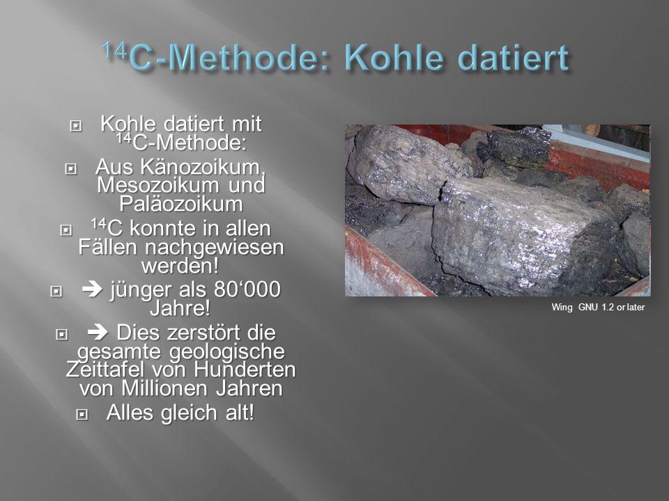  Kohle datiert mit 14 C-Methode:  Aus Känozoikum, Mesozoikum und Paläozoikum  14 C konnte in allen Fällen nachgewiesen werden.