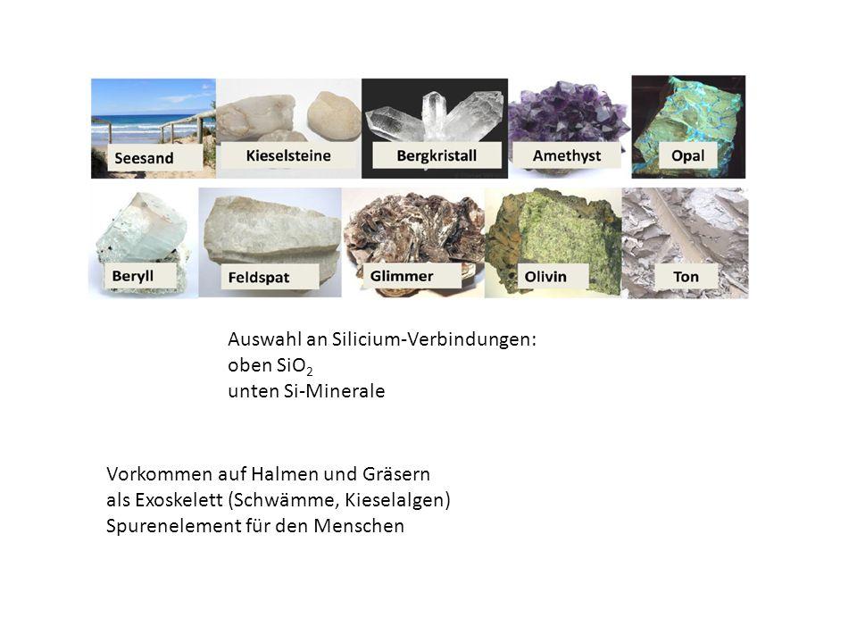 Auswahl an Silicium-Verbindungen: oben SiO 2 unten Si-Minerale Vorkommen auf Halmen und Gräsern als Exoskelett (Schwämme, Kieselalgen) Spurenelement für den Menschen
