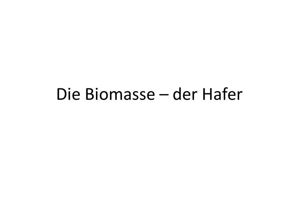 Die Biomasse – der Hafer
