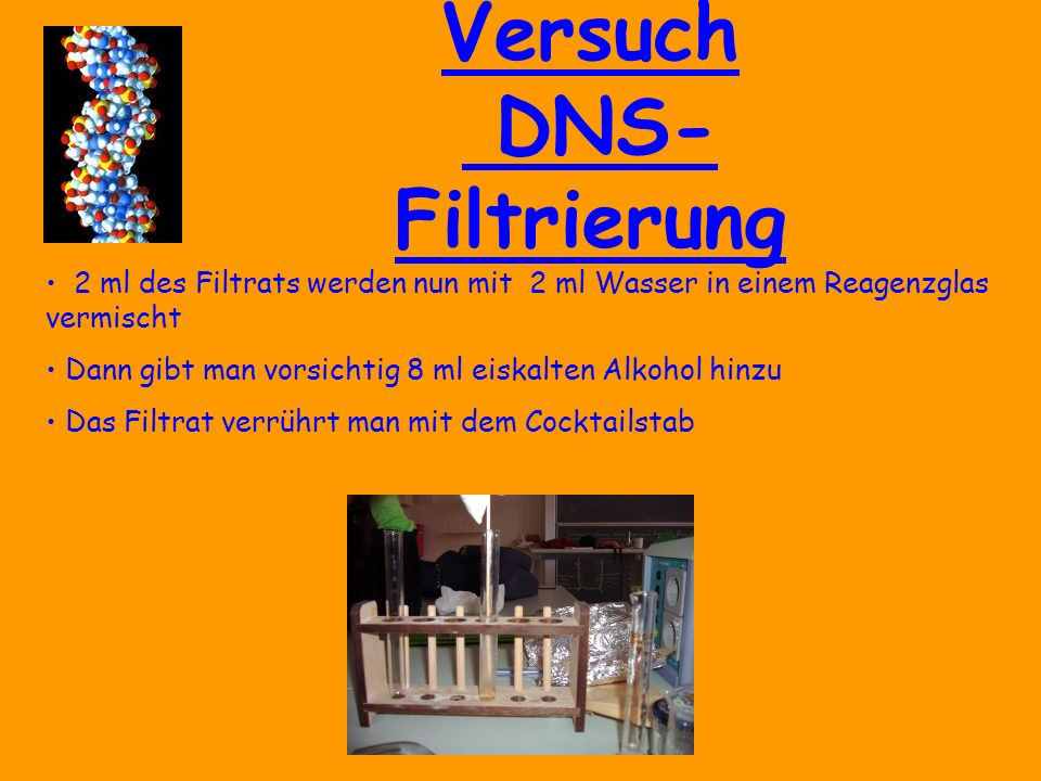 Versuch DNS- Filtrierung Der so entstandene Brei wird jetzt in den Kaffeefilter gegeben Eine geringe Menge von etwa 2 ml des Filtrats wird in einem Gefäß aufgefangen  Jetzt befindet sich die DNA gelöst im Filtrat