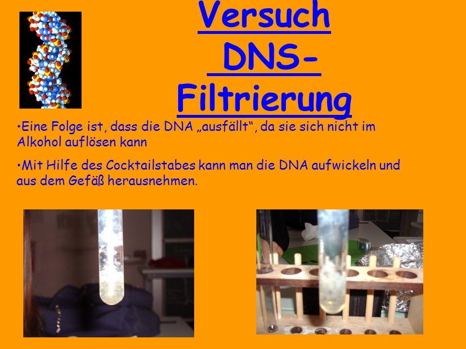 """Versuch DNS- Filtrierung Eine Folge ist, dass die DNA """"ausfällt , da sie sich nicht im Alkohol auflösen kann Mit Hilfe des Cocktailstabes kann man die DNA aufwickeln und aus dem Gefäß herausnehmen."""