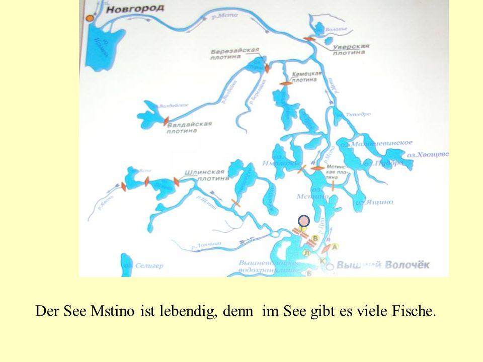 Der See Mstino ist lebendig, denn im See gibt es viele Fische.