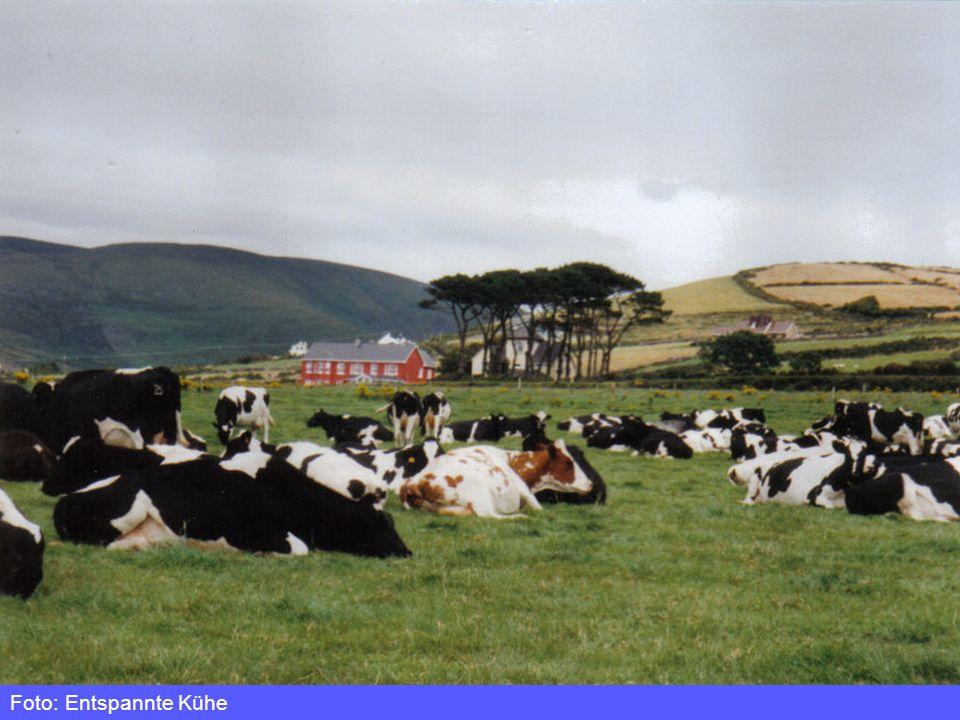 Simone Deiringer Foto: Entspannte Kühe