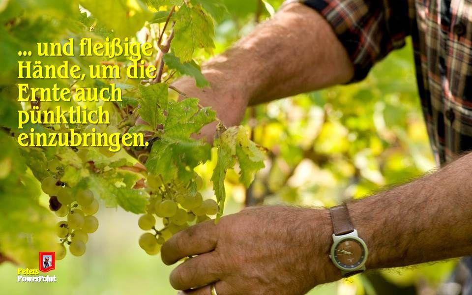 ... und fleißige Hände, um die Ernte auch pünktlich einzubringen. PetersPowerPoint