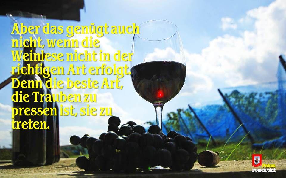 Aber das genügt auch nicht, wenn die Weinlese nicht in der richtigen Art erfolgt.