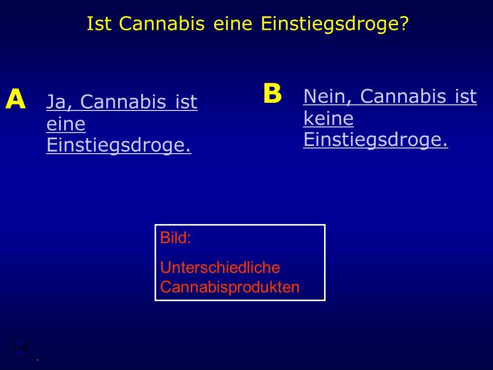 - 1994 hat das Bundesverfassungsgericht ein vieldiskutiertes Urteil zum Thema Cannabis verkündet.