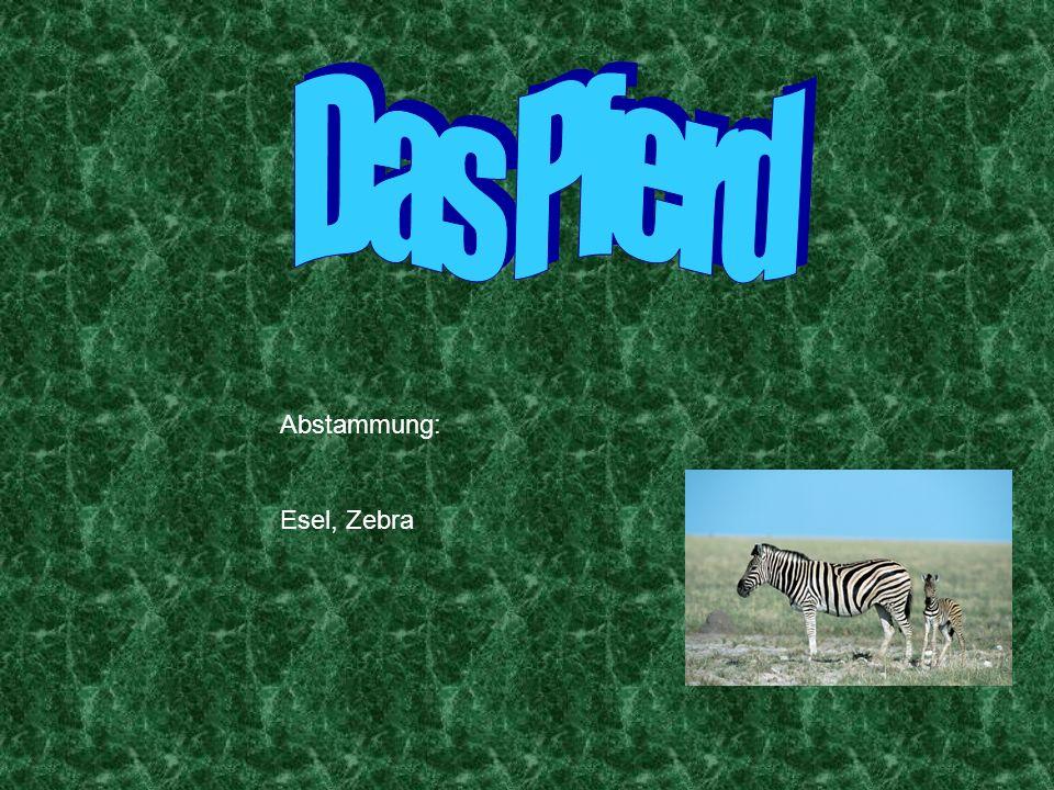 Abstammung: Esel, Zebra