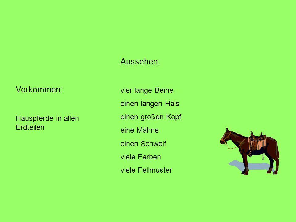 Vorkommen: Hauspferde in allen Erdteilen Aussehen: vier lange Beine einen langen Hals einen großen Kopf eine Mähne einen Schweif viele Farben viele Fellmuster