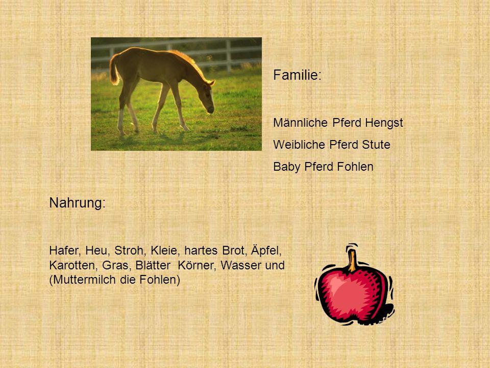 Nahrung: Hafer, Heu, Stroh, Kleie, hartes Brot, Äpfel, Karotten, Gras, Blätter Körner, Wasser und (Muttermilch die Fohlen) Familie: Männliche Pferd Hengst Weibliche Pferd Stute Baby Pferd Fohlen