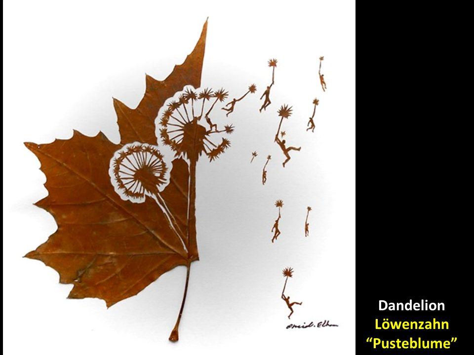 Dandelion Löwenzahn Pusteblume