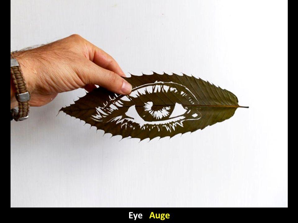 Eye Auge