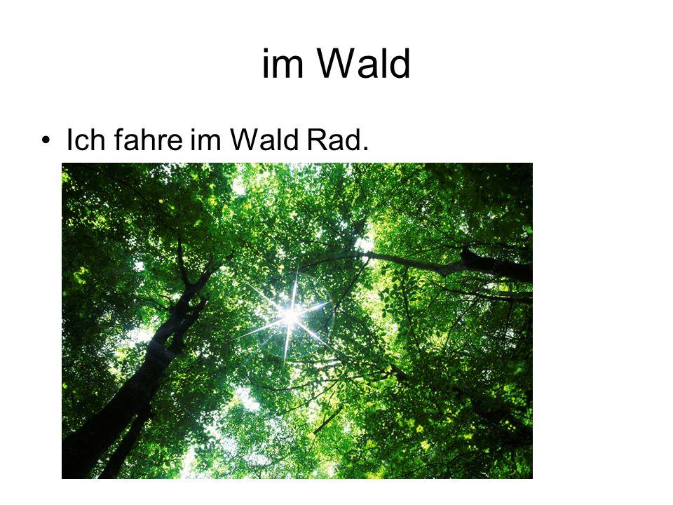 im Wald Ich fahre im Wald Rad.
