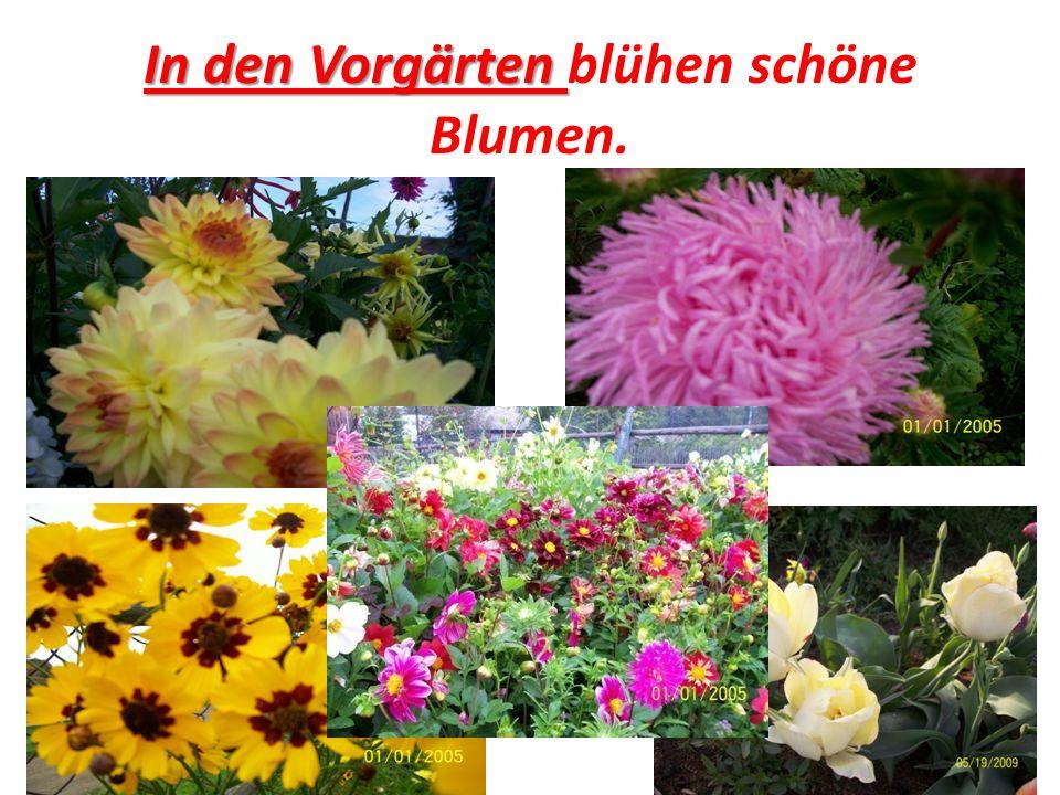 In den Vorgärten In den Vorgärten blühen schöne Blumen.