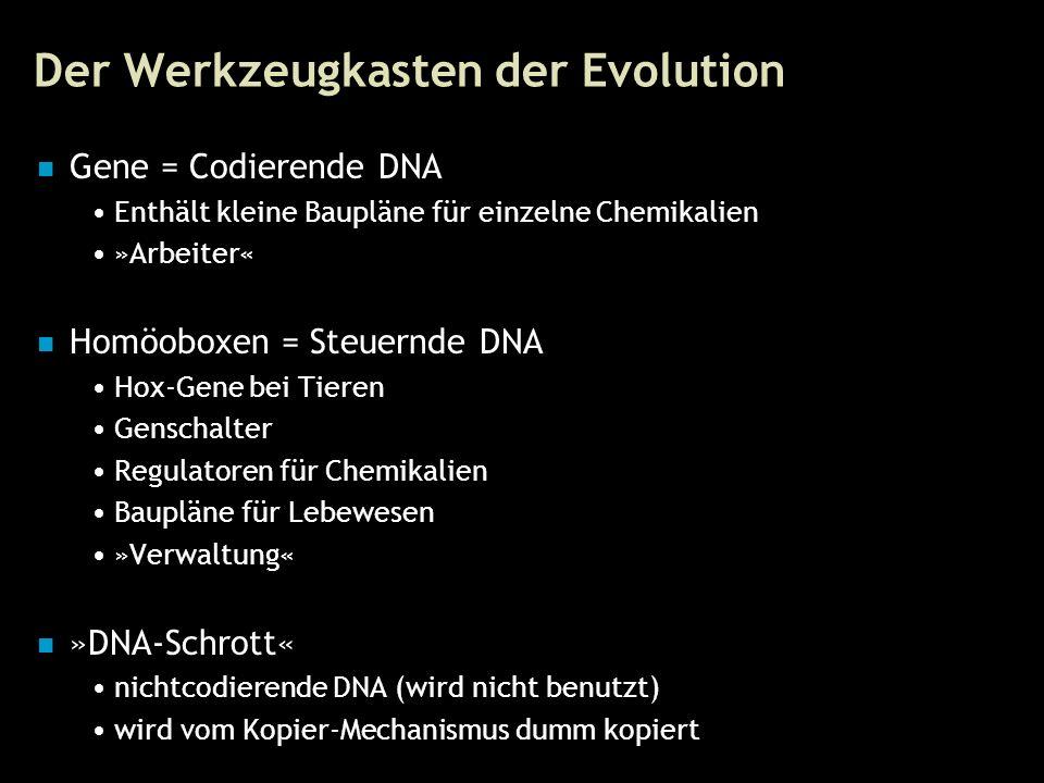 9 Der Werkzeugkasten der Evolution Gene = Codierende DNA Enthält kleine Baupläne für einzelne Chemikalien »Arbeiter« Homöoboxen = Steuernde DNA Hox-Ge