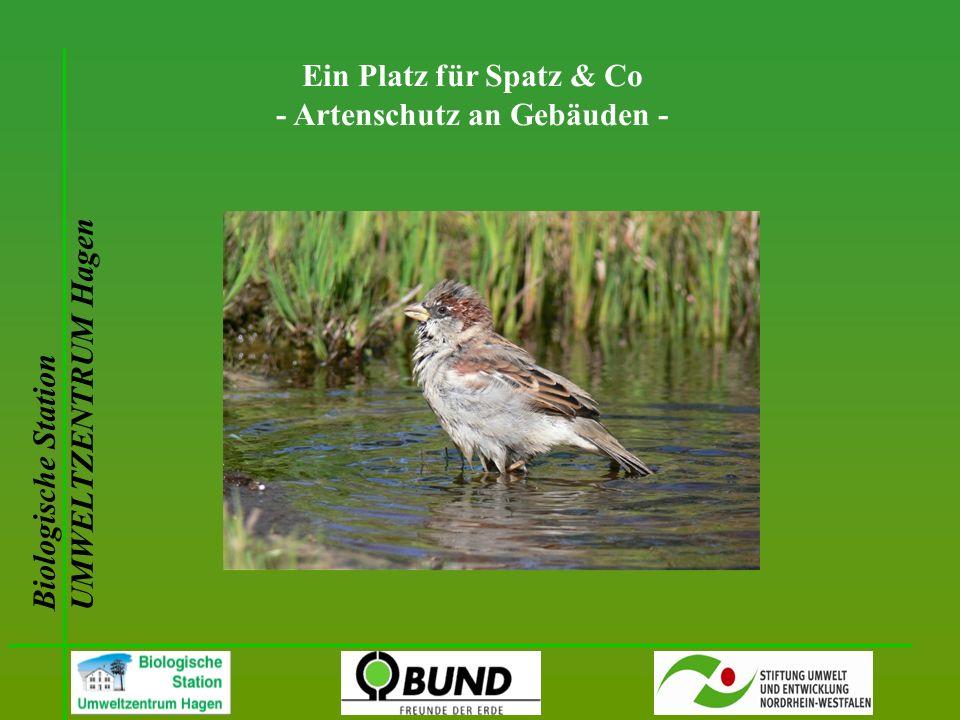 Biologische Station UMWELTZENTRUM Hagen Ein Platz für Spatz & Co - Artenschutz an Gebäuden -