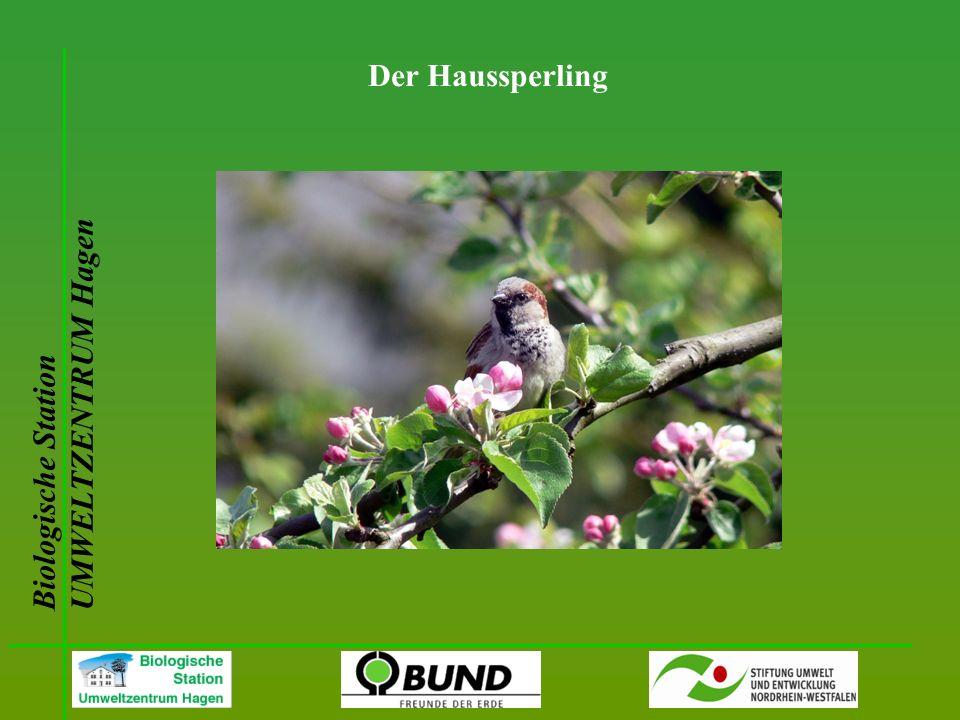 Biologische Station UMWELTZENTRUM Hagen Der Haussperling