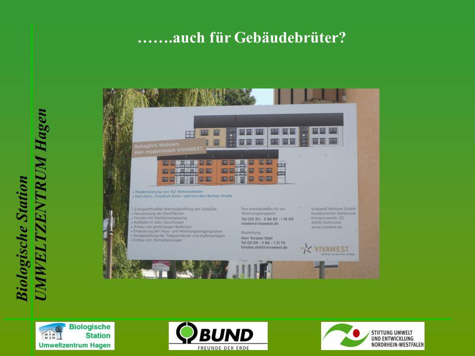 Biologische Station UMWELTZENTRUM Hagen …….auch für Gebäudebrüter?
