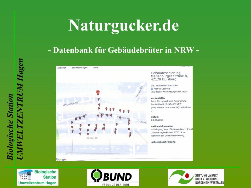 Biologische Station UMWELTZENTRUM Hagen Naturgucker.de - Datenbank für Gebäudebrüter in NRW -