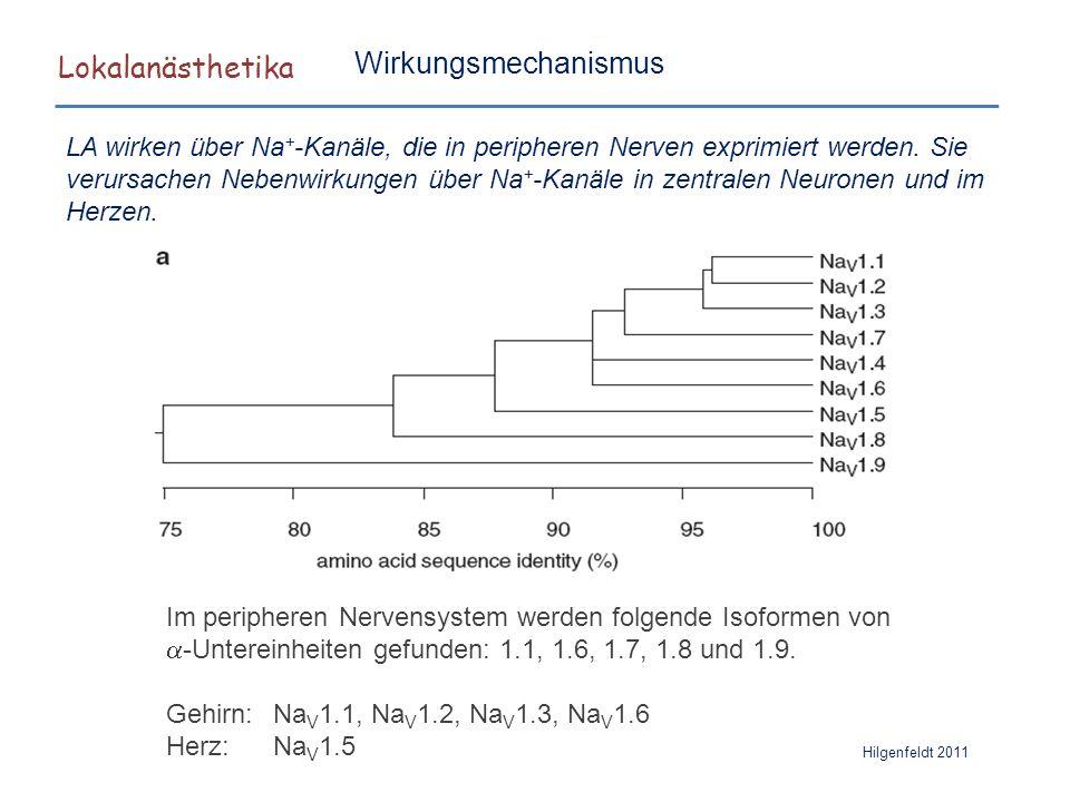 Lokalanästhetika Hilgenfeldt 2011 LA wirken über Na + -Kanäle, die in peripheren Nerven exprimiert werden. Sie verursachen Nebenwirkungen über Na + -K