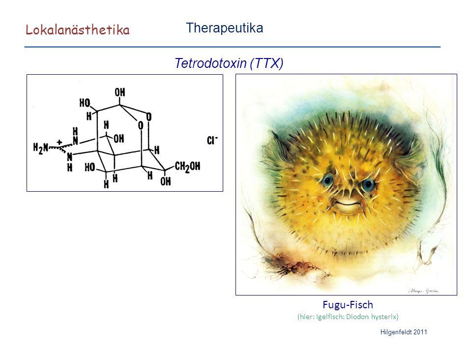 Lokalanästhetika Hilgenfeldt 2011 Therapeutika Tetrodotoxin (TTX) Fugu-Fisch (hier: Igelfisch: Diodon hysterix)