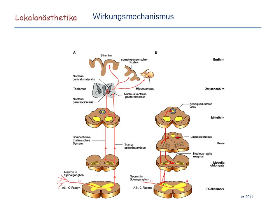 Lokalanästhetika Hilgenfeldt 2011 Wirkungsmechanismus Typen von Nervenfasern Querschnitt durch einen Peripheren Nerven: Myelinisierte Nervenfaser Nicht-myelinisierte Nervenfaser