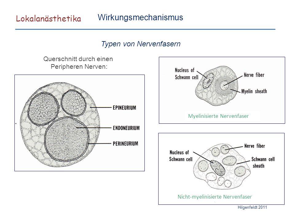 Lokalanästhetika Hilgenfeldt 2011 Wirkungsmechanismus Typen von Nervenfasern Querschnitt durch einen Peripheren Nerven: Myelinisierte Nervenfaser Nich