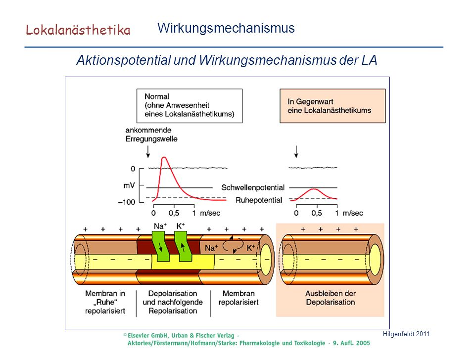 Lokalanästhetika Hilgenfeldt 2011 Therapeutika Liocain Mittel der Wahl : Kurzer Wirkungseintritt (1-2min), Wirkdauer ohne Arenalin 1-2h.