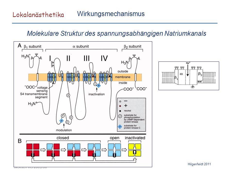 """Lokalanästhetika """"sliding helix model Hilgenfeldt 2011 LA I = Isoleucin (1760) F = Phenylalanin (1764) Y = Tyrosin (1771) Wirkungsmechanismus Molekulare Struktur des spannungsabhängigen Natriumkanals"""