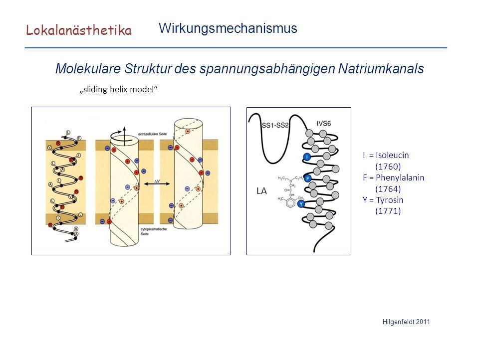 "Lokalanästhetika ""sliding helix model"" Hilgenfeldt 2011 LA I = Isoleucin (1760) F = Phenylalanin (1764) Y = Tyrosin (1771) Wirkungsmechanismus Molekul"