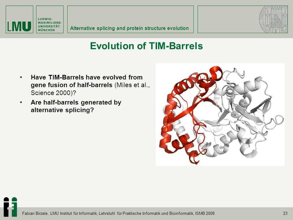 23 Alternative splicing and protein structure evolution Fabian Birzele, LMU Institut für Informatik, Lehrstuhl für Praktische Informatik und Bioinformatik, ISMB 2008 Evolution of TIM-Barrels Have TIM-Barrels have evolved from gene fusion of half-barrels (Miles et al., Science 2000).