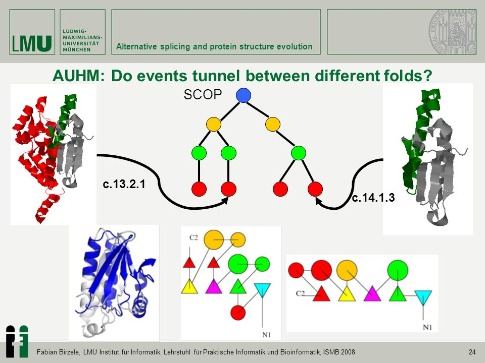 24 Alternative splicing and protein structure evolution Fabian Birzele, LMU Institut für Informatik, Lehrstuhl für Praktische Informatik und Bioinformatik, ISMB 2008 AUHM: Do events tunnel between different folds.