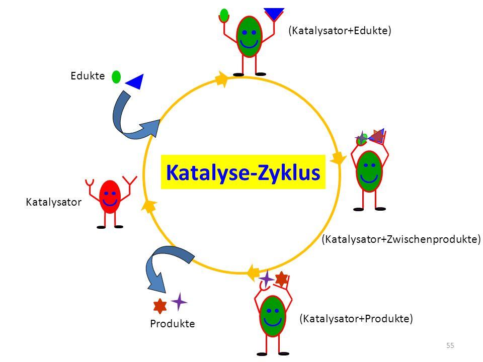 Katalyse-Zyklus Edukte Produkte (Katalysator+Edukte) Katalysator (Katalysator+Zwischenprodukte) (Katalysator+Produkte) 55