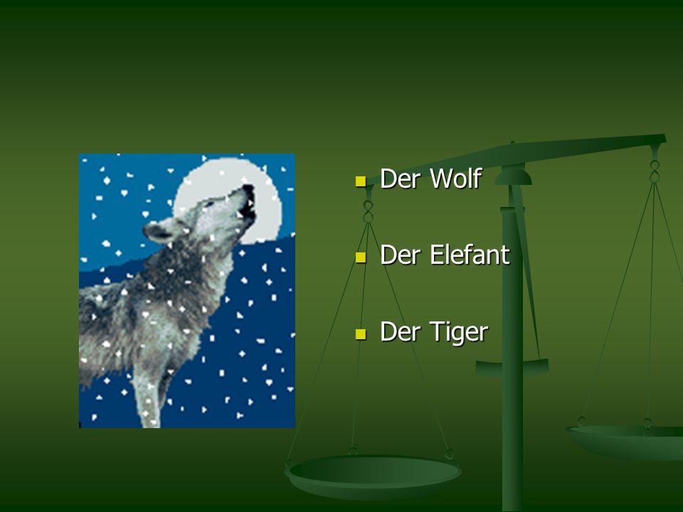 Der Wolf Der Elefant Der Tiger
