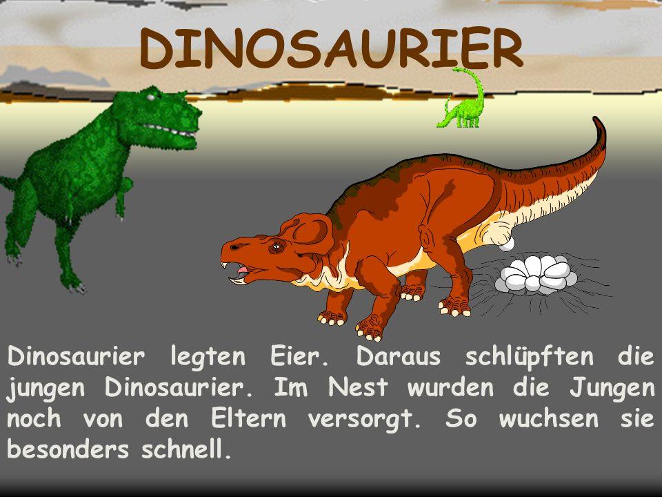 DINOSAURIER Dinosaurier legten Eier. Daraus schlüpften die jungen Dinosaurier.